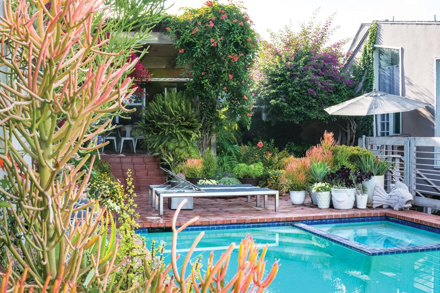 Two lounge chairs, accented by pots of drought-tolerant flowers, succulents and mature bougainvillea, mandevilla, star jasmine and abundant ferns, sit on the terrace by the pool. Sticks of fire contrast with the blue of the pool.