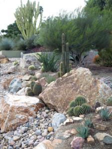 Patrick's supremely low-water streetside garden features ornamental rocks of all sizes and cacti that produce bright, satiny blooms in spring.