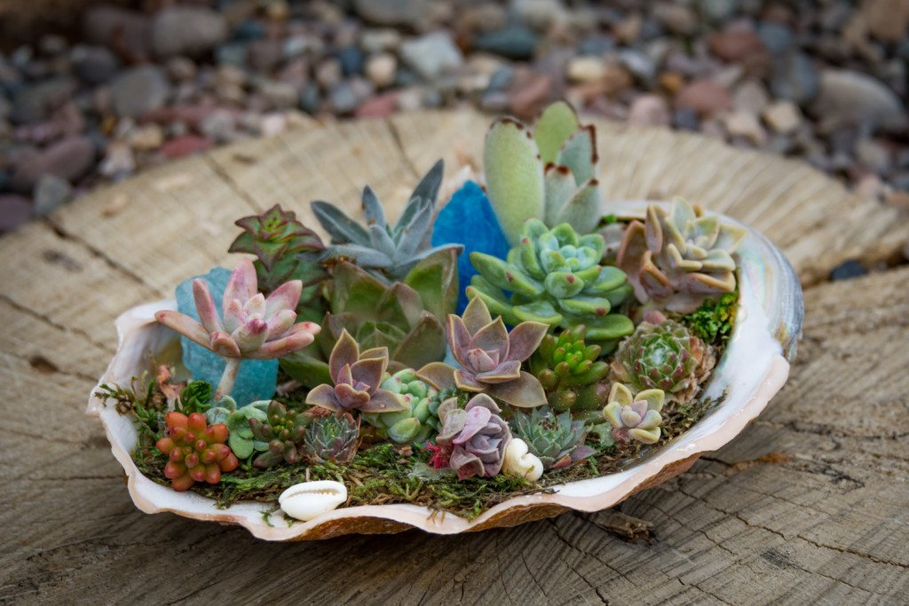 creative succulent succulents abalone shell tablescape tabletop indoors shade