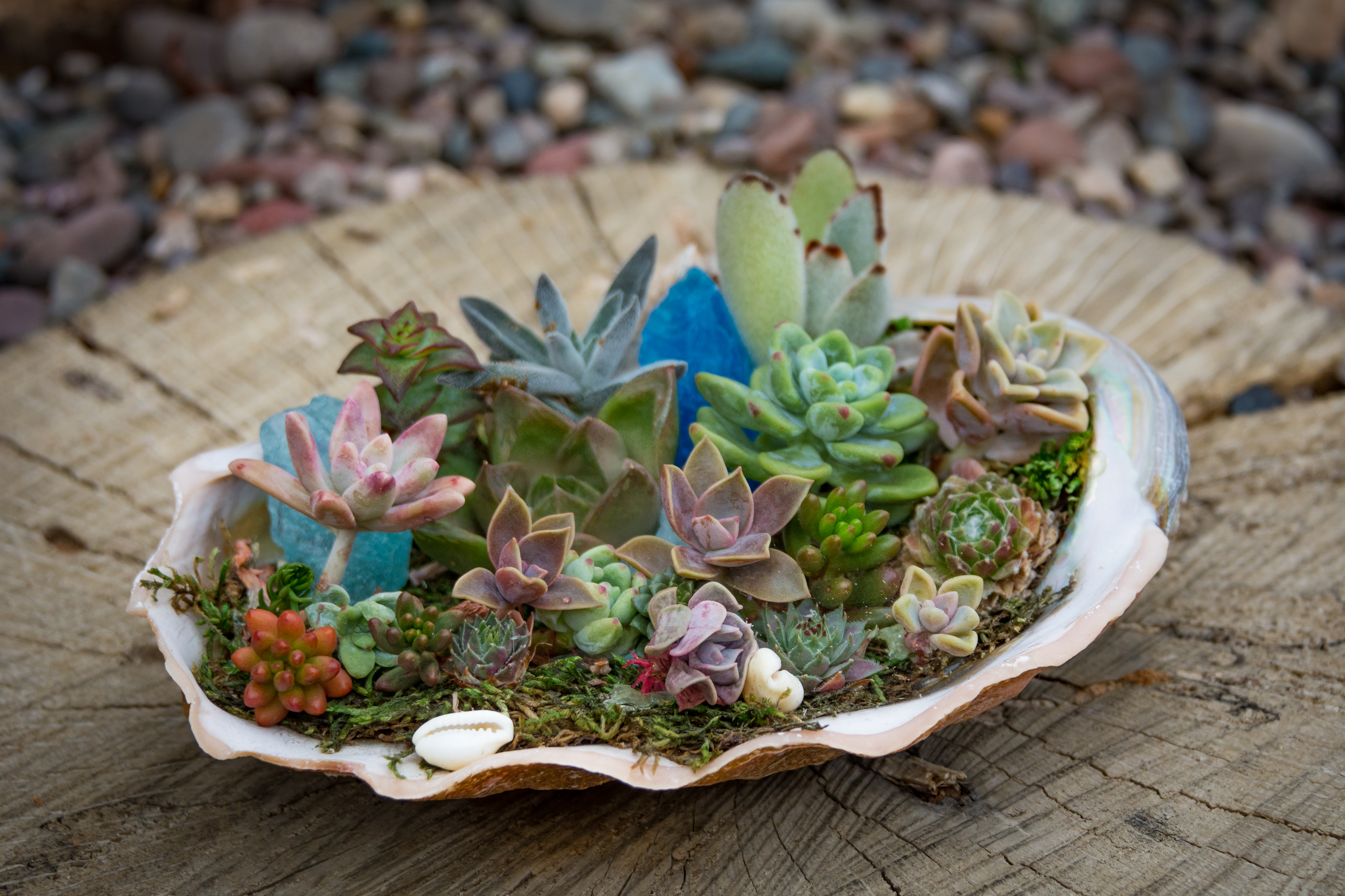 8 Creative Ways To Plant Succulents San Diego Home Garden Lifestyles