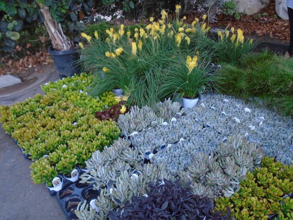 Events for Gardeners in October