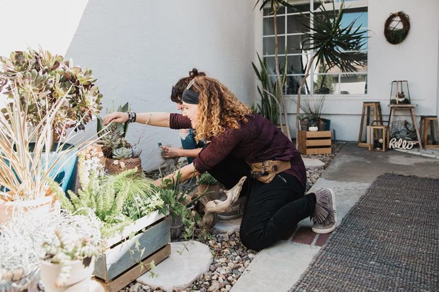 Rachel Cohen, Infinite Succulent.