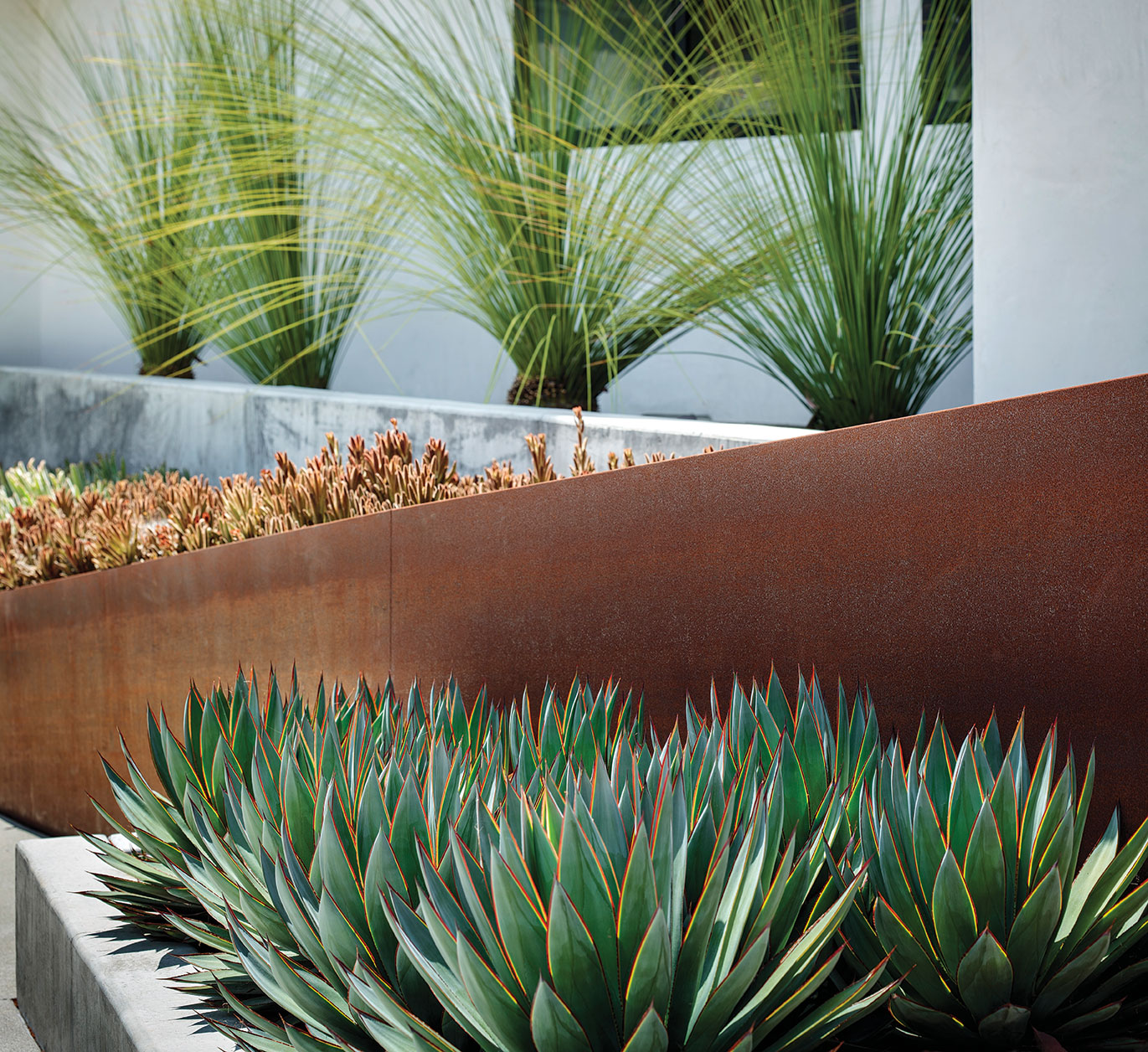 Aloe, agave and grasses in steel and concrete planters