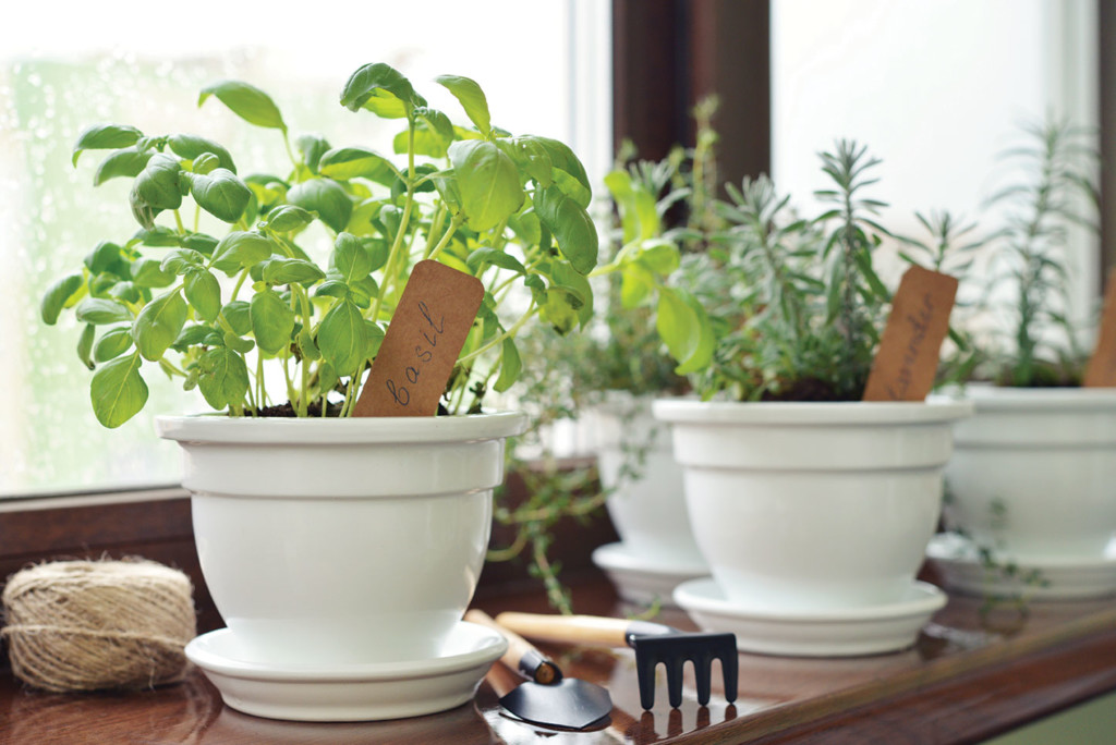 bury herb and lettuce seeds in pots