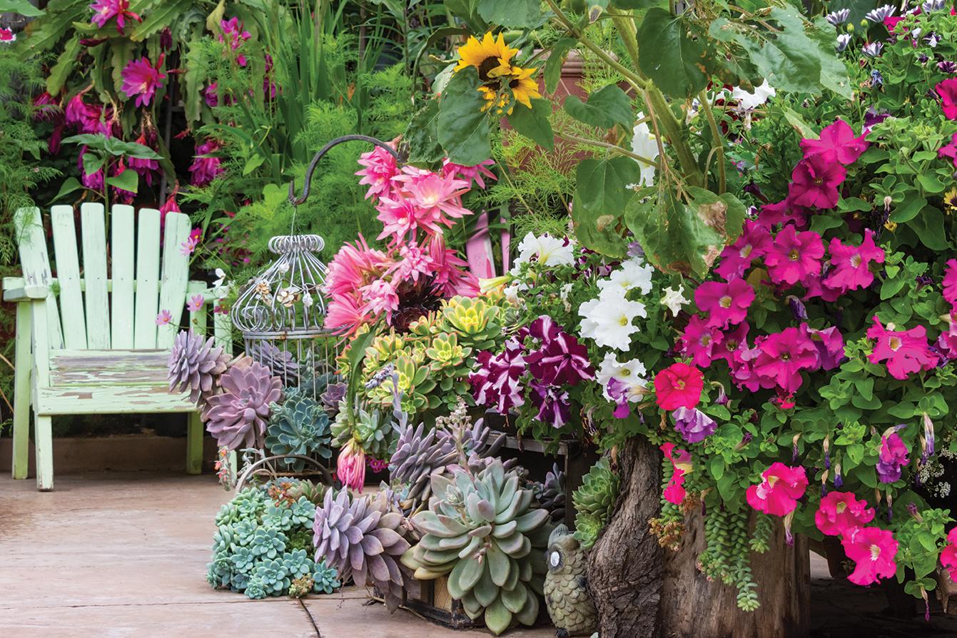 farmer becomes a gardener san diego east county landscape flowers