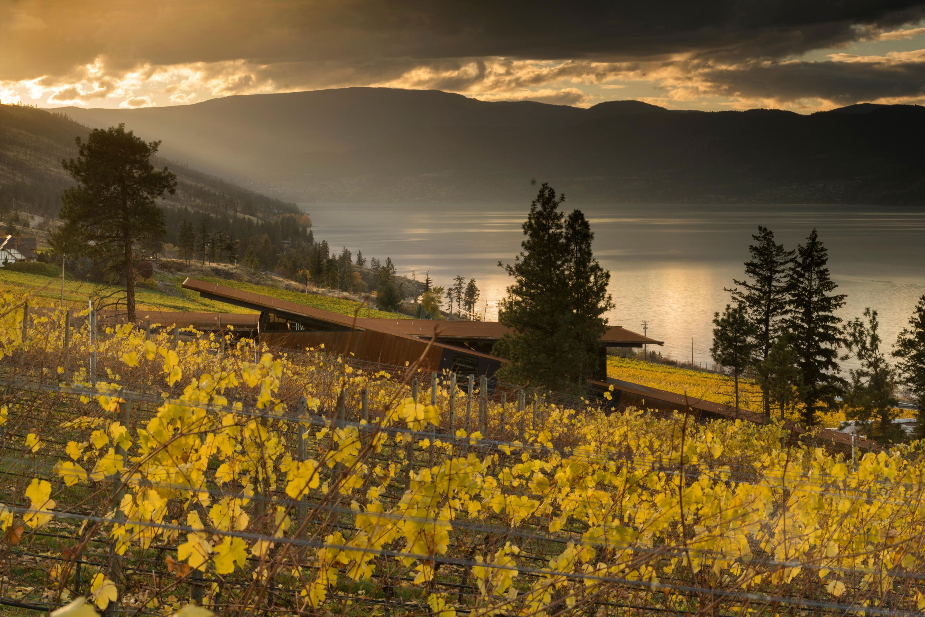 Tom Kundig Martin Lane Winery British Columbia Dominique Houriet San Diego architect oo-d-a