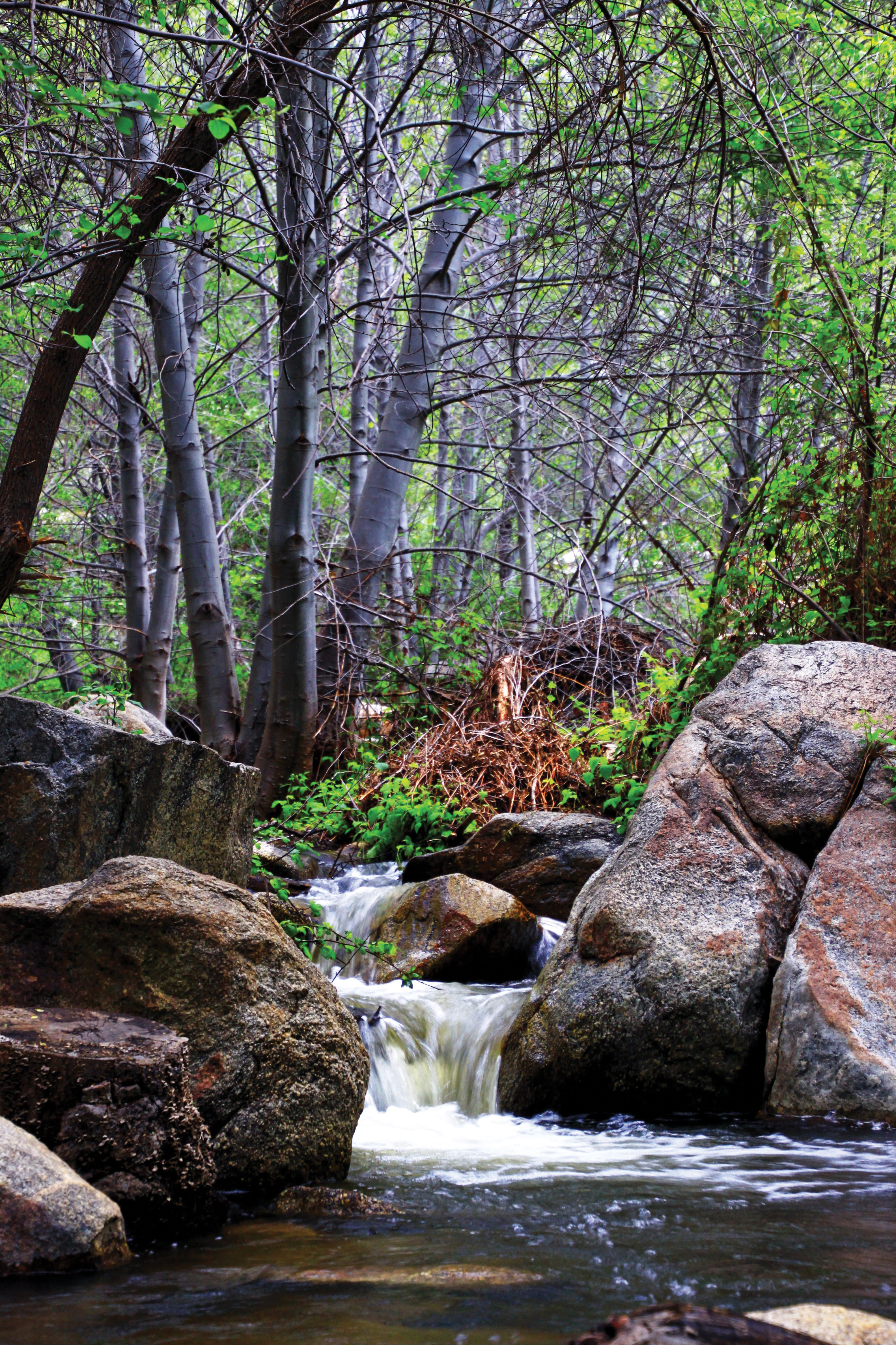 Green Valley Falls campground Cuyamaca Rancho State Park Dominique Houriet