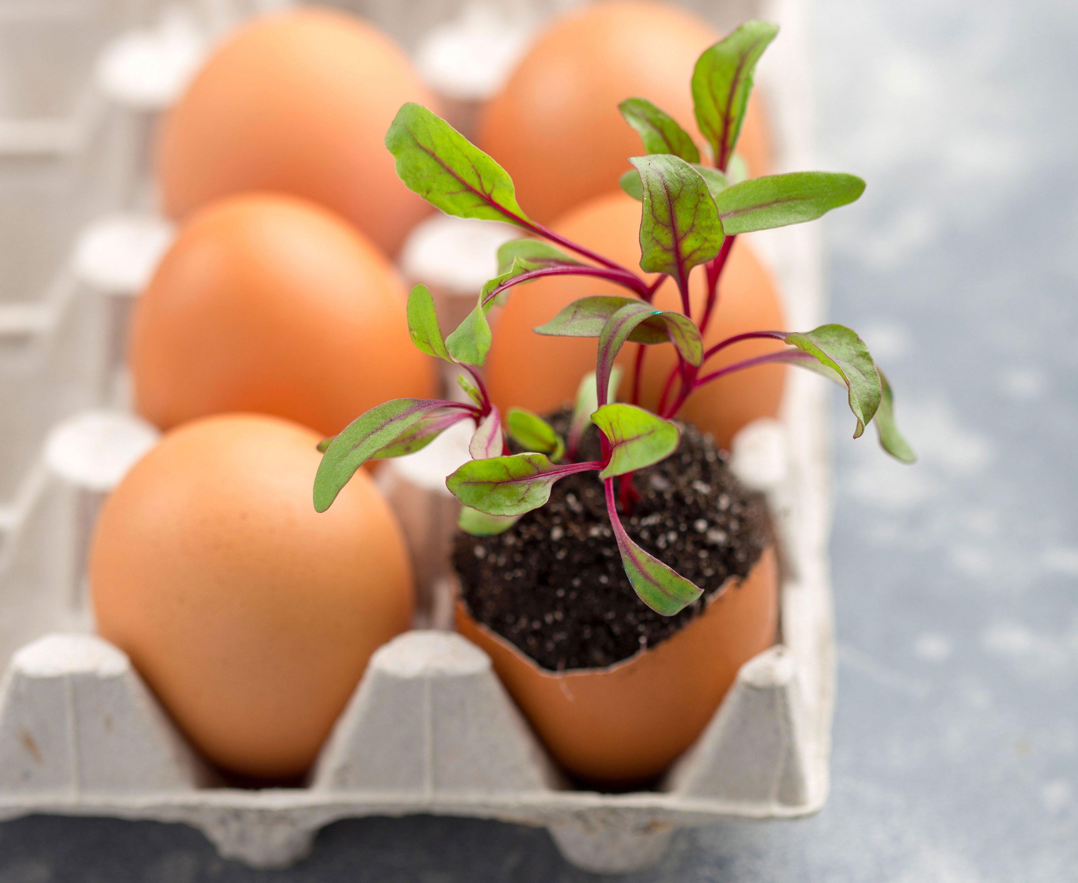 eggshell garden eggshell pot