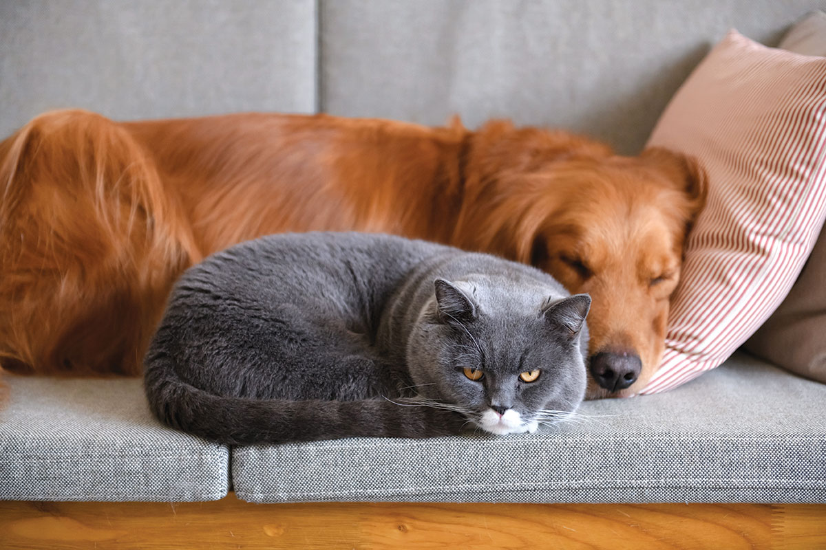 pet furniture solutions