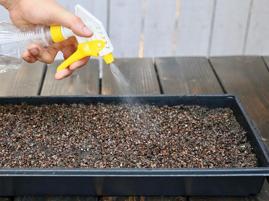 microgreens epic gardening DIY how to greens san diego kevin espiritu garden