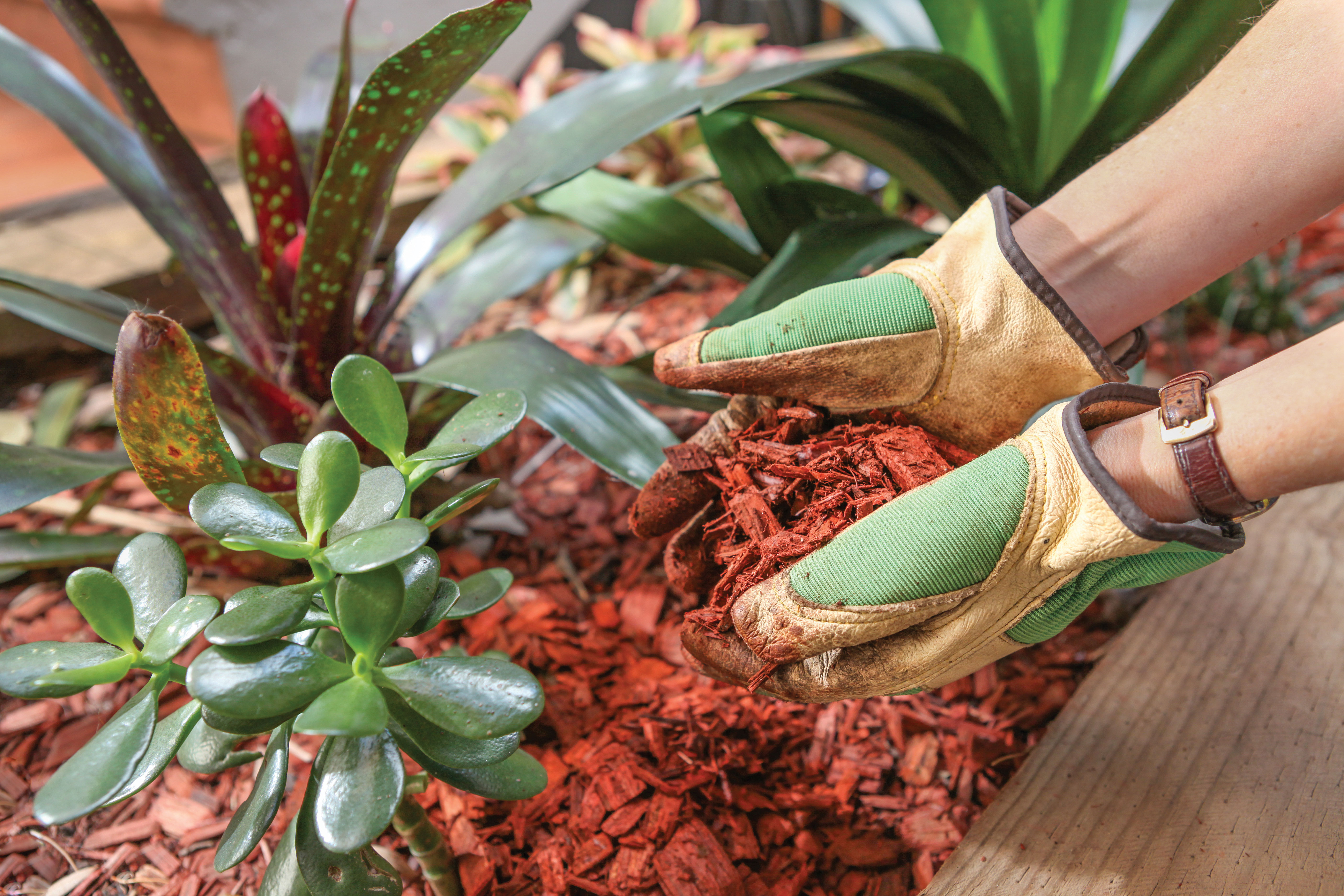 mulch garden rain prep