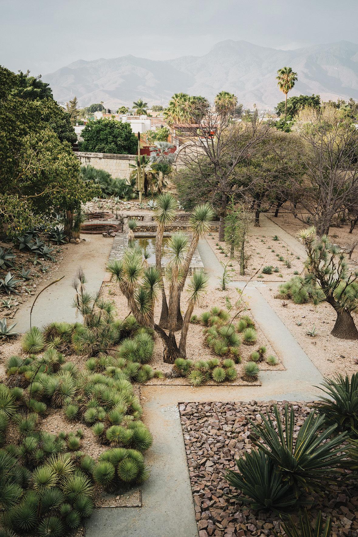 oaxaca travel mexico jardin etnobotanico de oaxaca ethnobotanical garden botanical