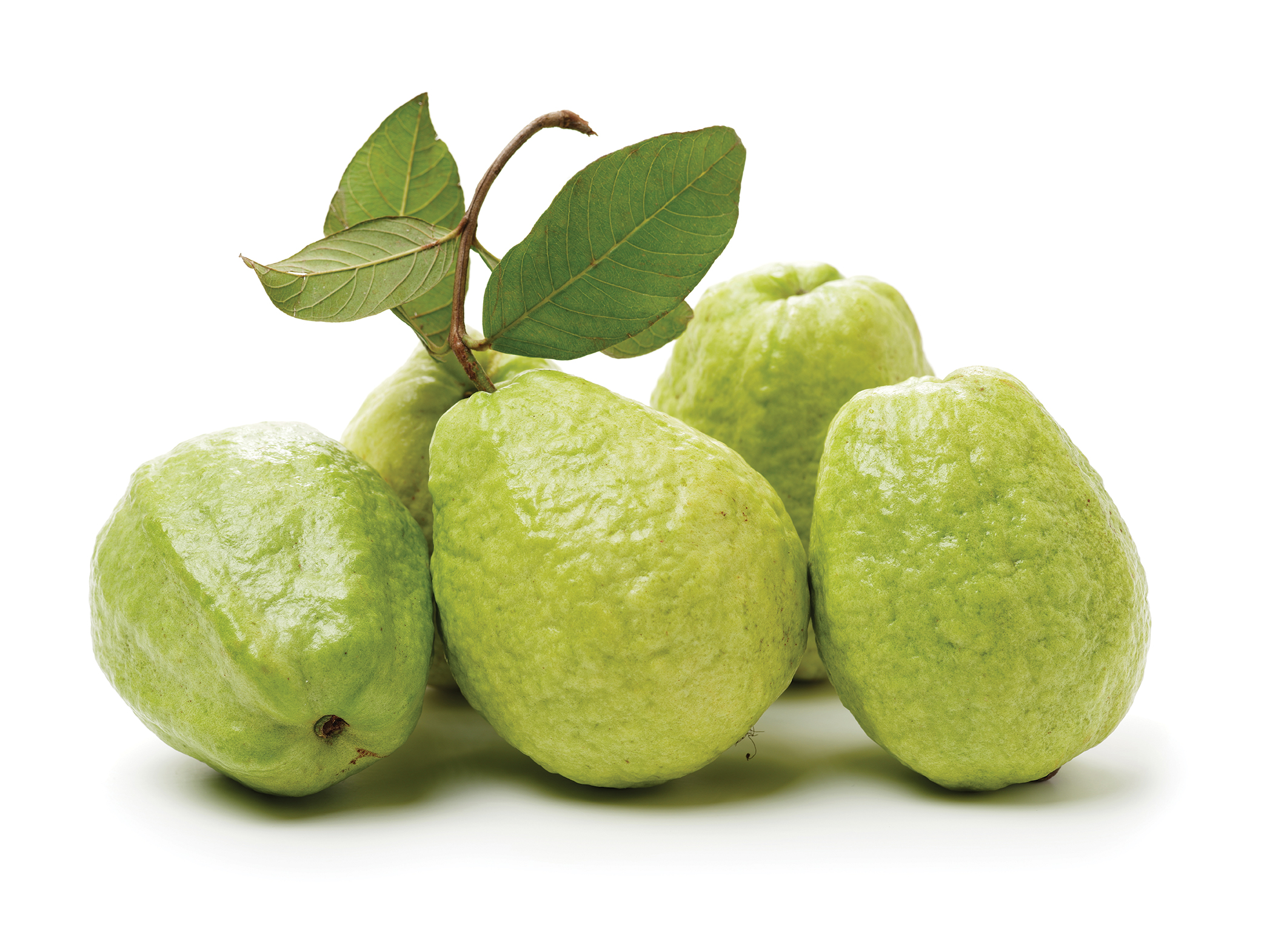 garden may san diego calendar citrus