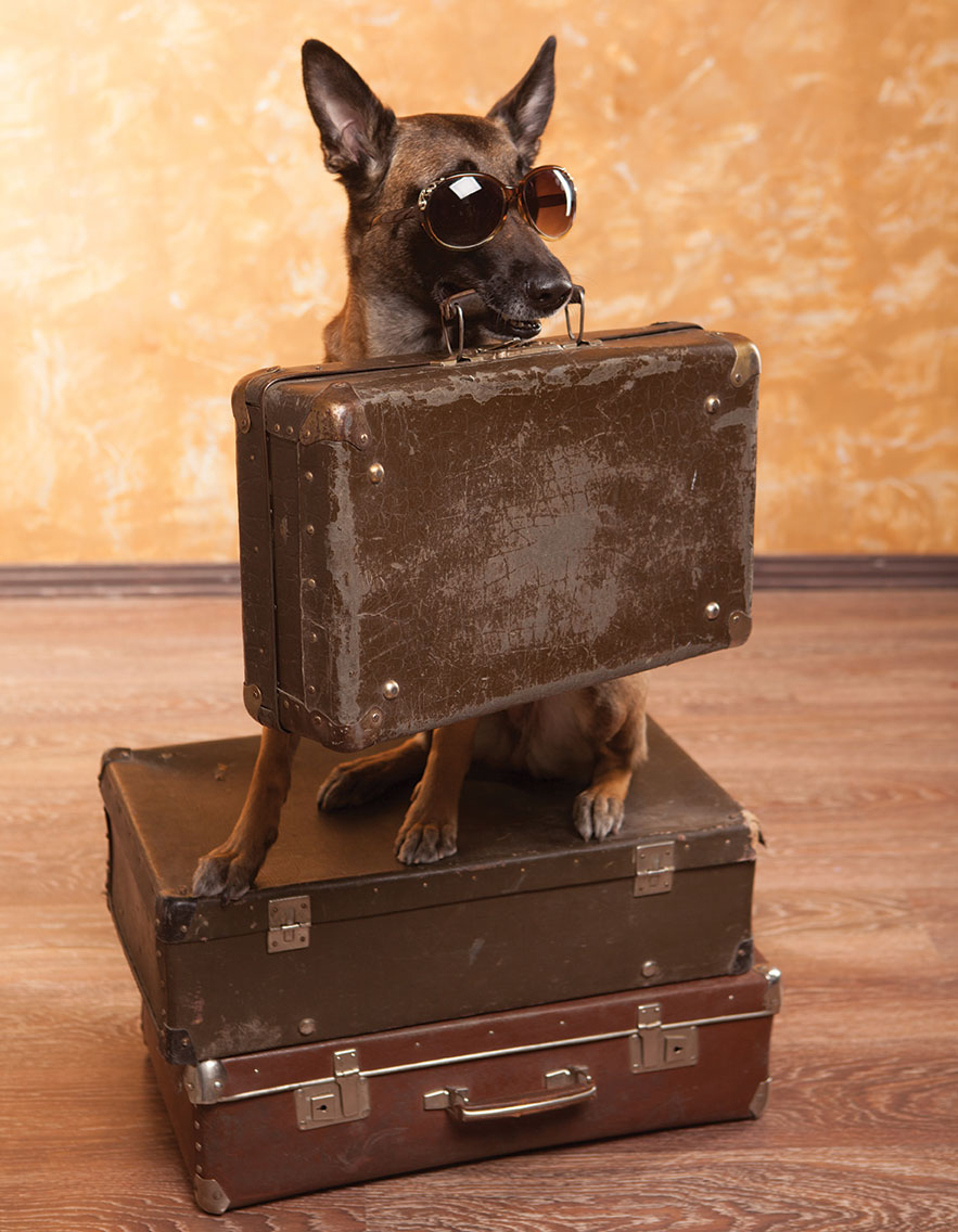 travel with dogs pet friendly vacation