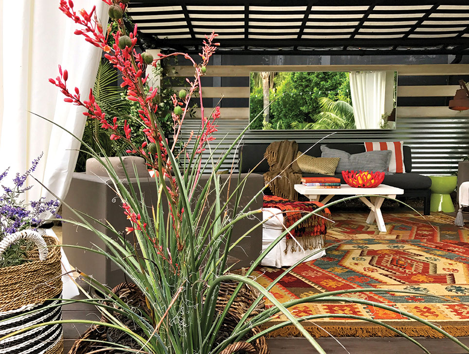 red kangaroo paw flower in a sheltered garden room with a mirror in a Burle Yates Design room