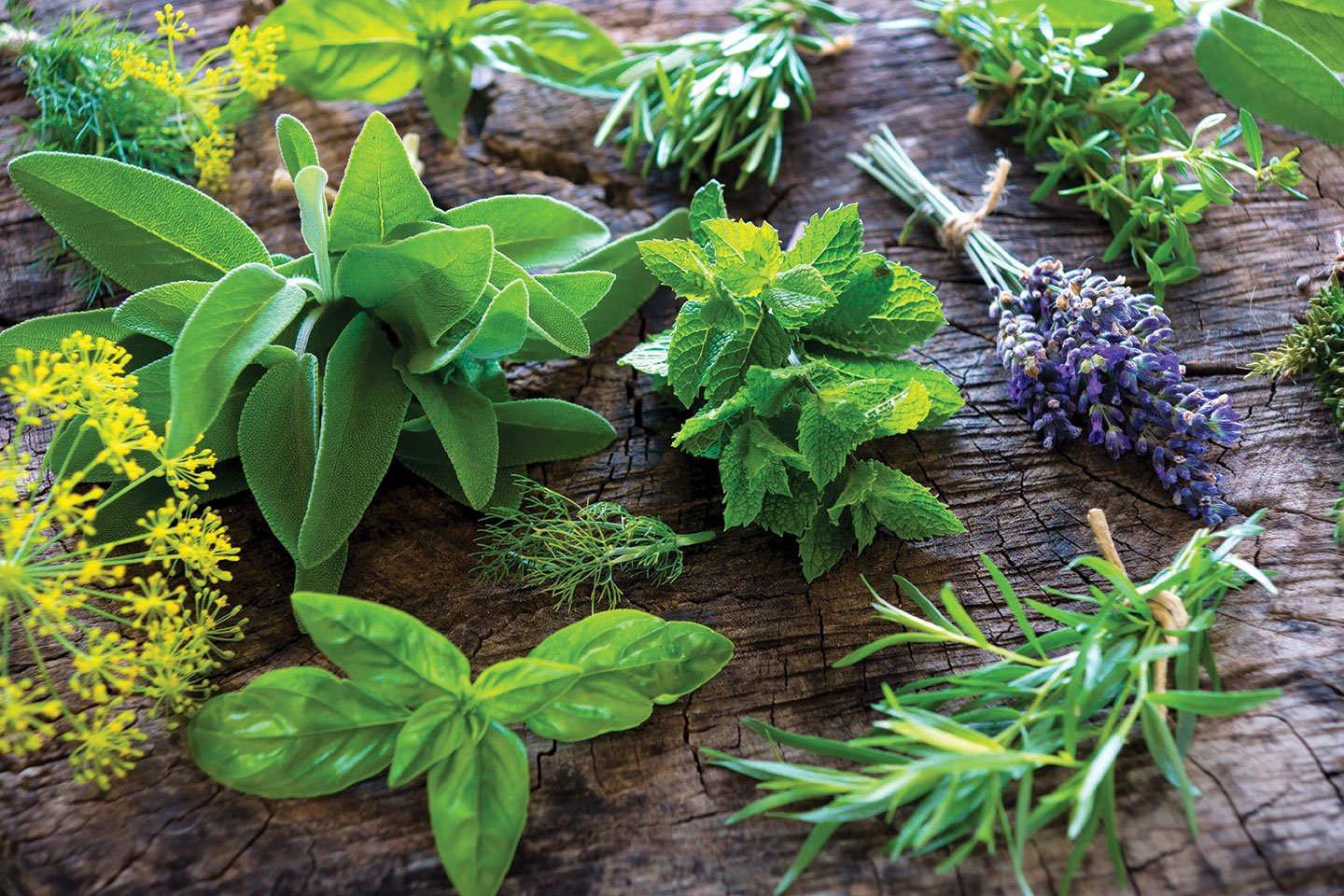 grow your own herbs herb garden bunches of basil mint sage lavender rosemary and more