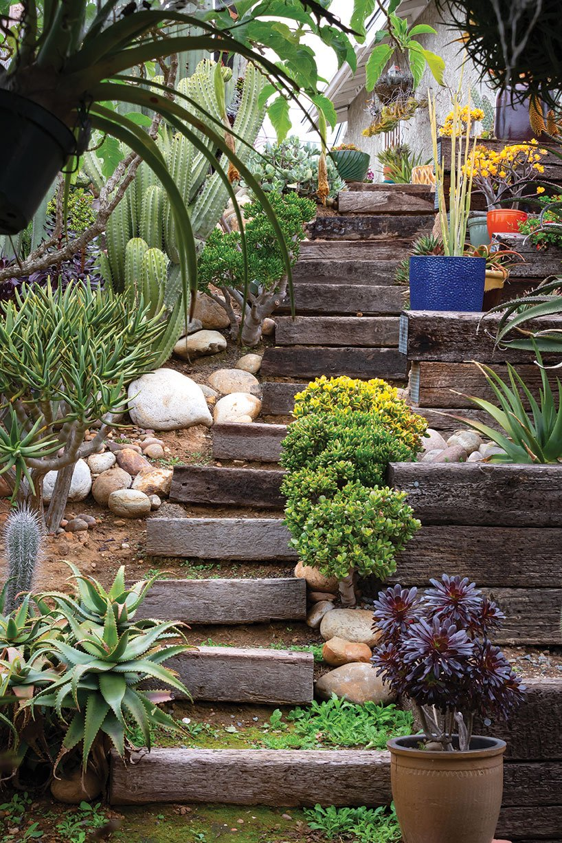 air plants outside outdoors rustic steps