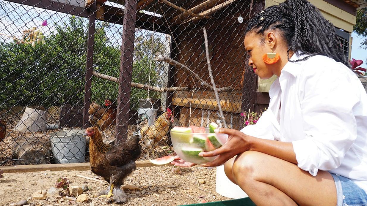 treci smith chickens