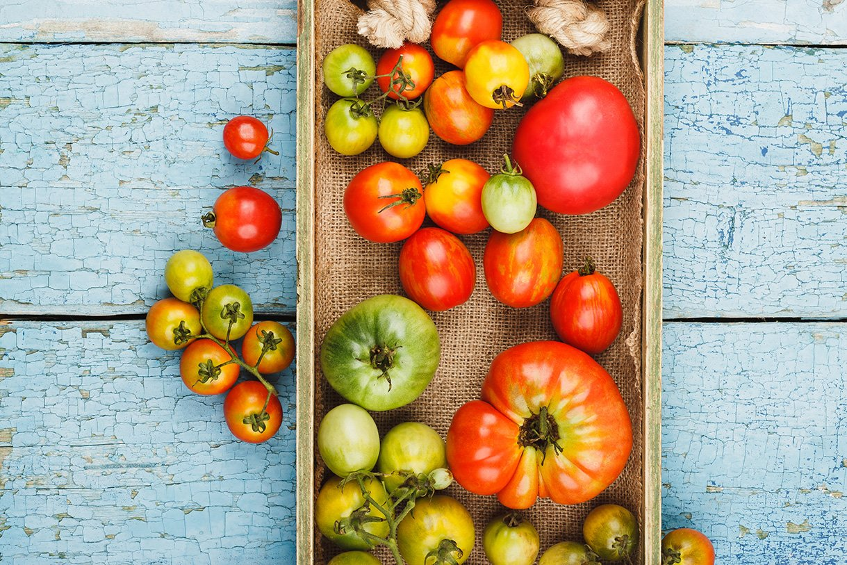 tomato yield gardening