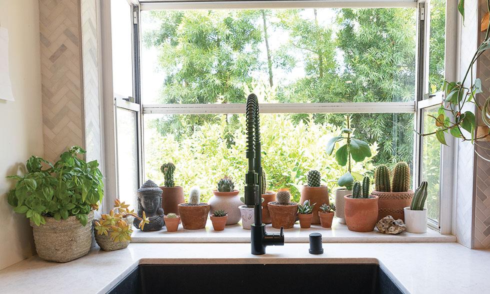 houseplants kitchen window