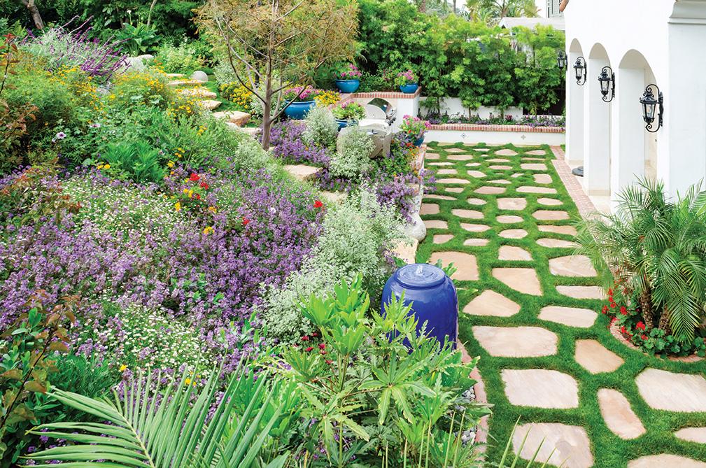 terraced cottage garden scaevola