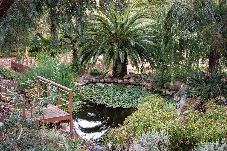 hidden lake ranch koi pond wooden platform canary island date palm