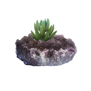 amethyst-succulent