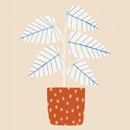 Blue_Lines_Plant_Sarah_Golden5x7