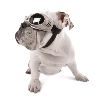 doggles-#6