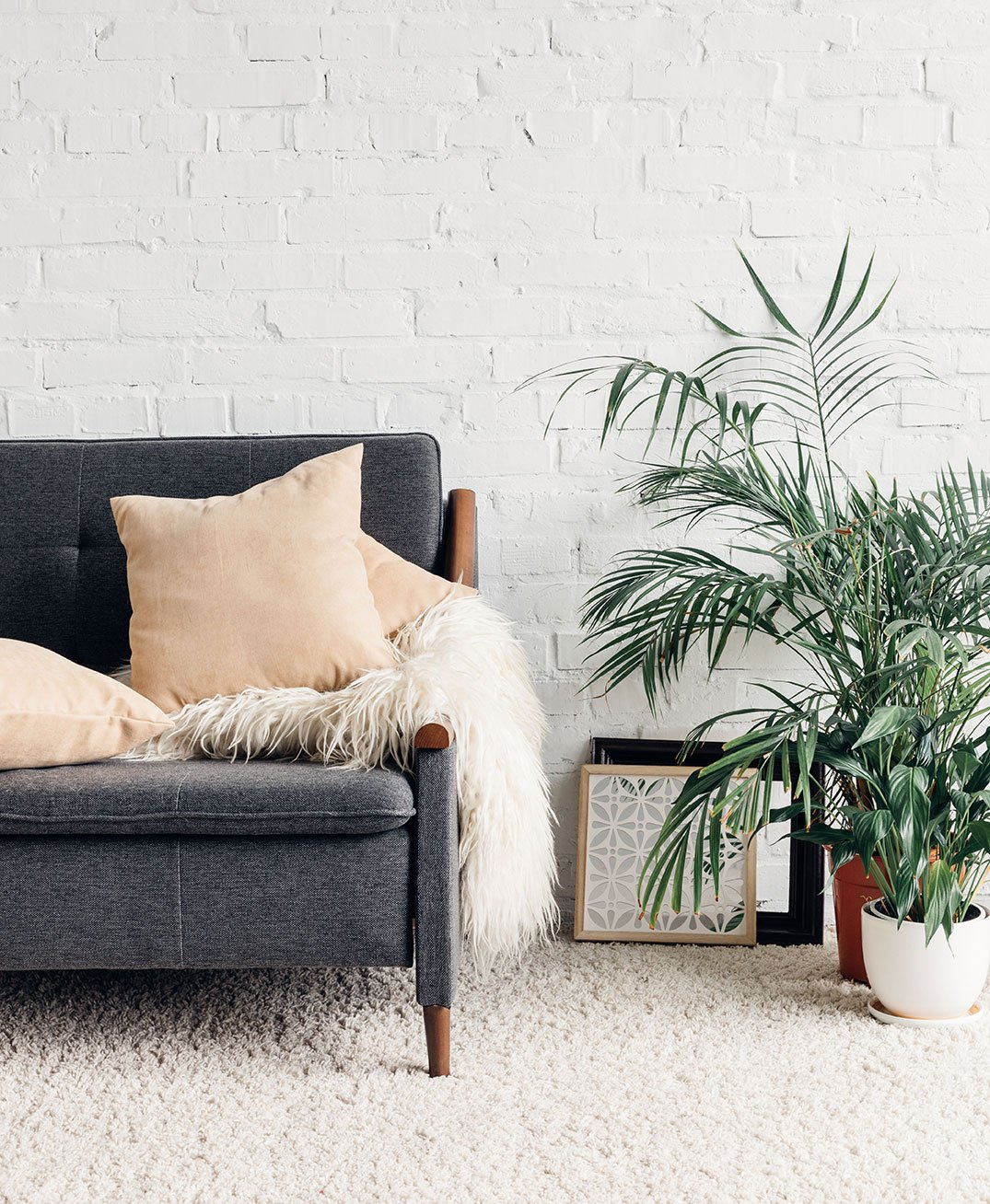 house plants living room green interior