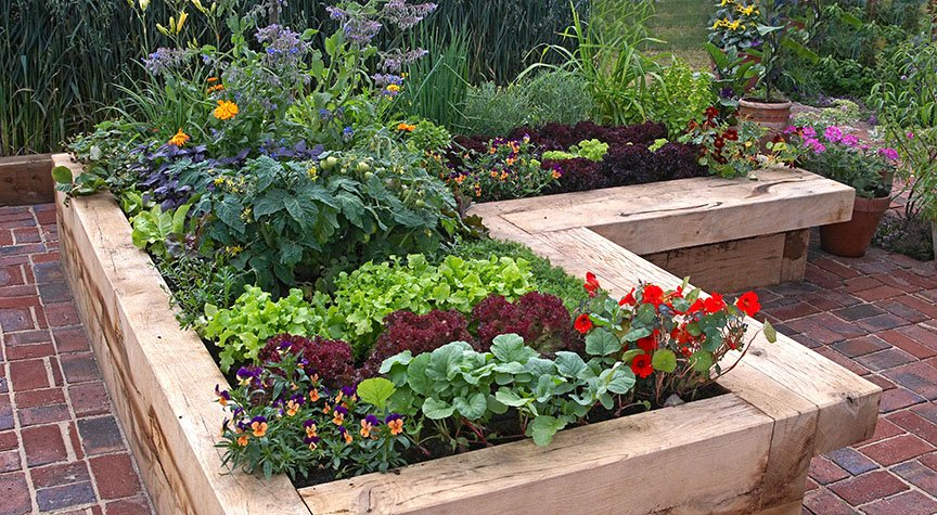 Garden Guide Edible Plants