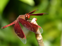 dragonfly wallpapers_J