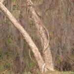 Local Arborist Discusses Impact Of Spring Storms