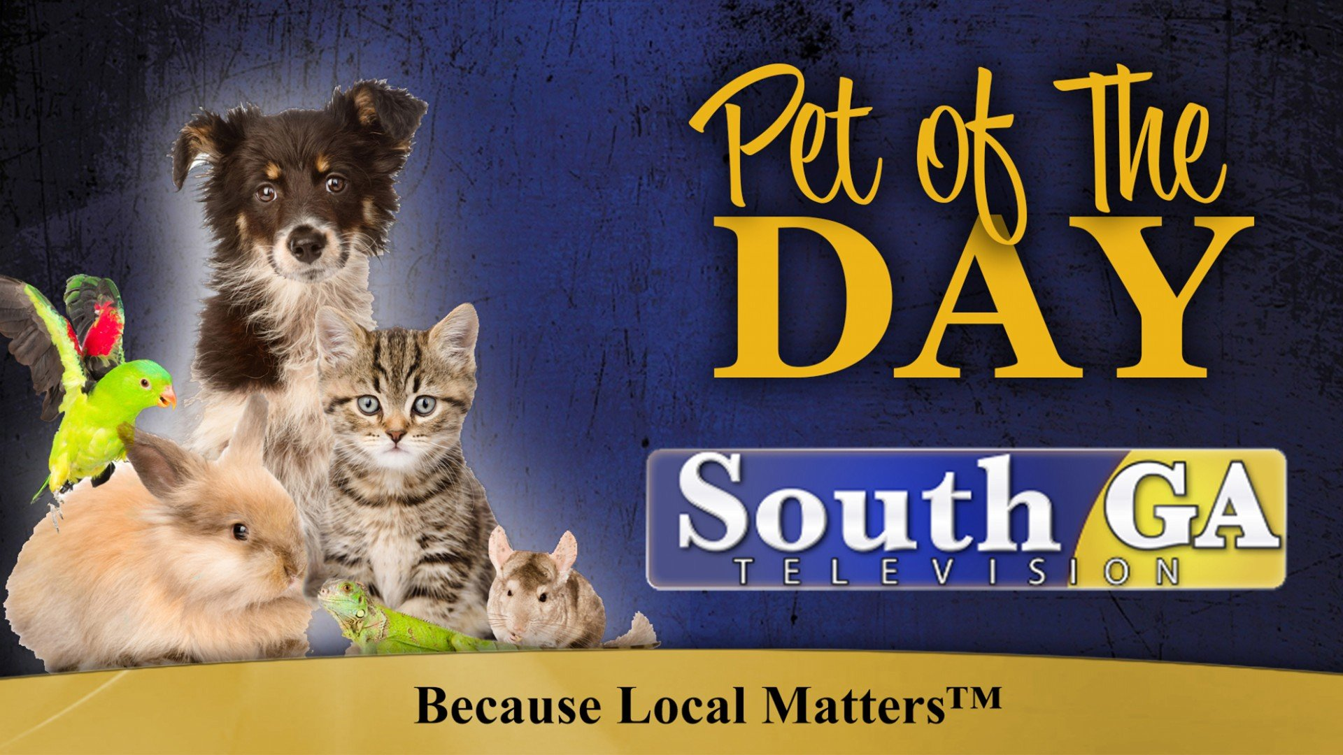 Pet Of The Day Soga