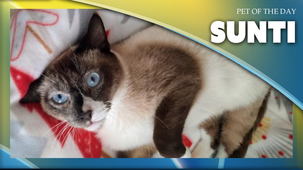 Pet Of The Day: Sunti