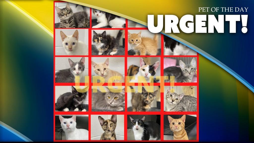 Urgent Kitties