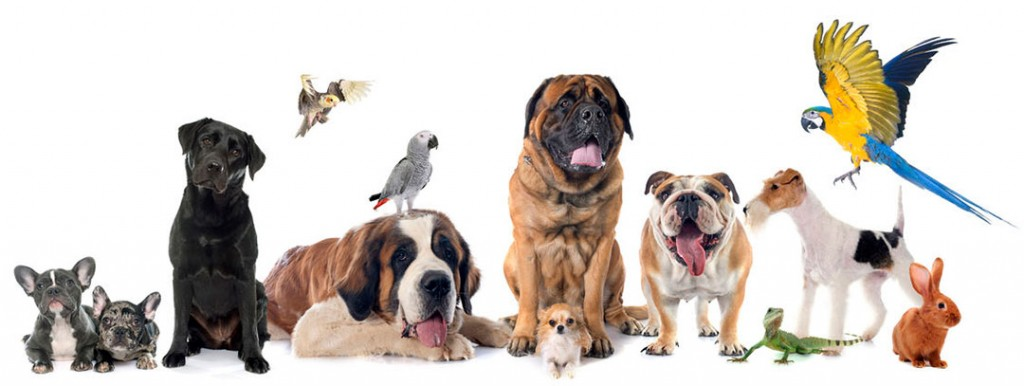 Animals Pets Dogs Cats Birds 95840980 S