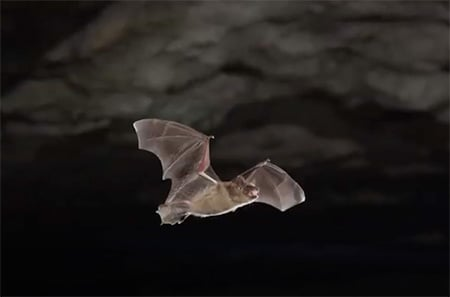 Bat Video Clip