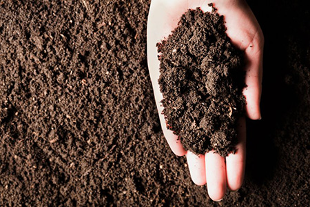 Compost 99719553 S