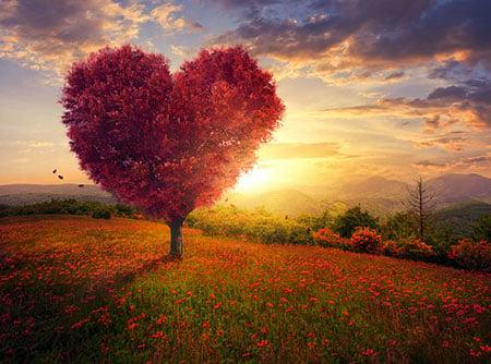 Heart 54757891 S