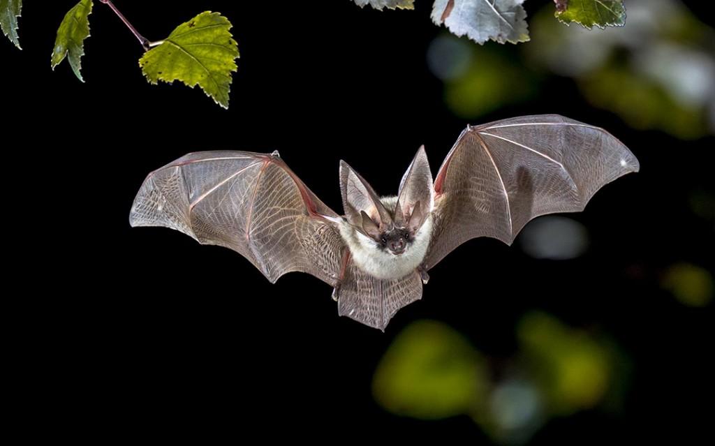 Bat 115935871 M