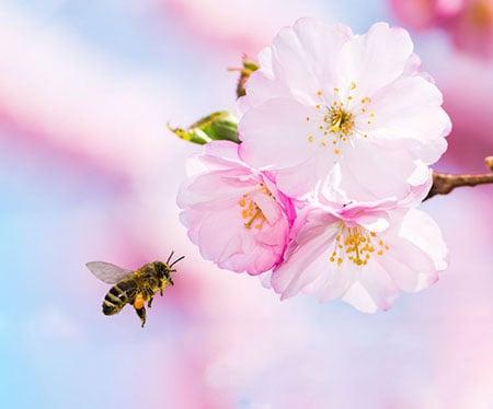 Bee Pink Flower 116246995 S