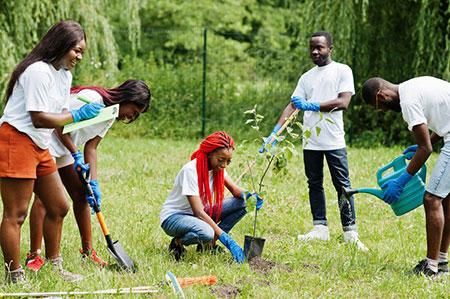 Planting Tree 127095464 S