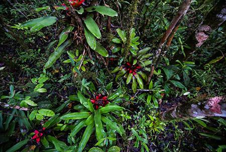 Rich Plant Diversity Brazilian Atlantic Forest Gui Becker Cc By Sa