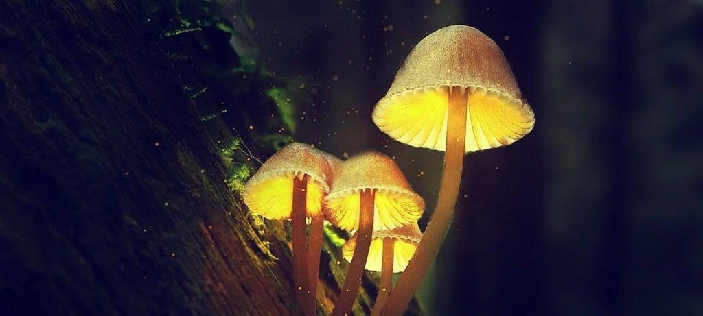 Mushrooms 5672656 1920