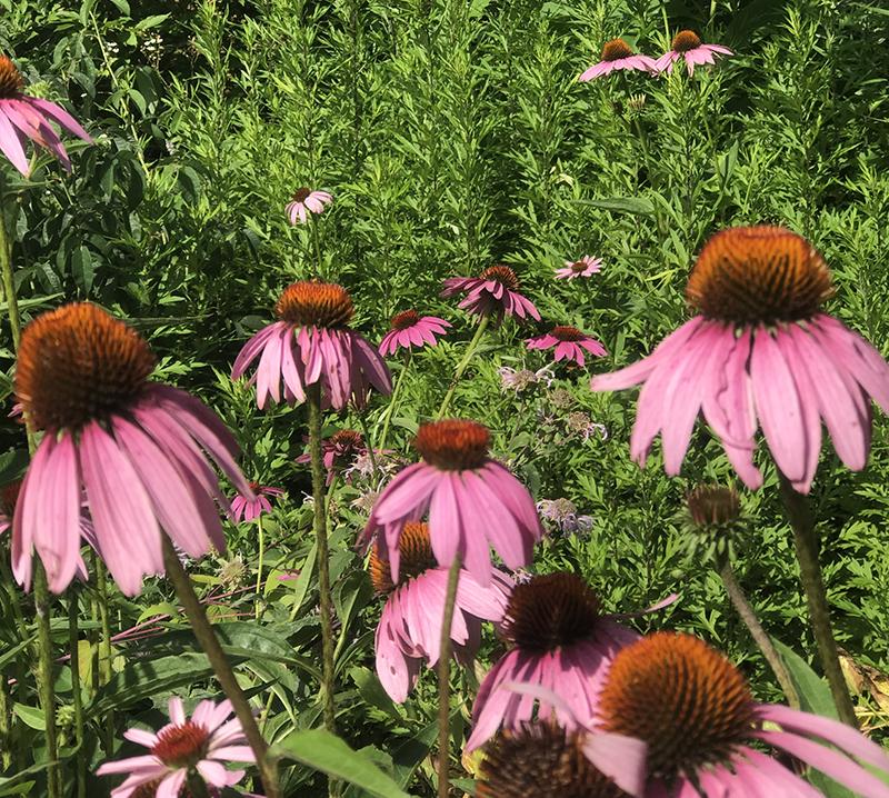 Hillside Herbals