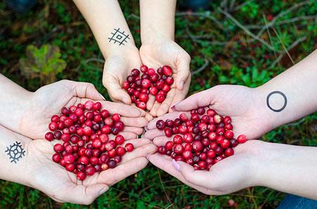 Cranberries 2810138 640