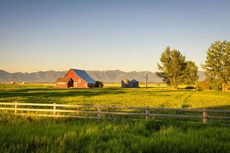 Farm 88461319 S
