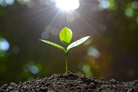 Seedling 61242607 S