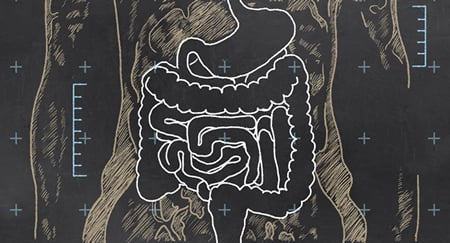 illustration-of-gut-24916523 S